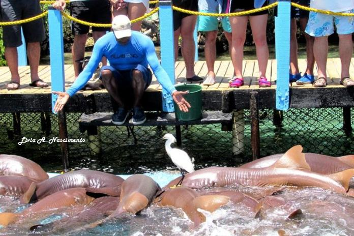 They say it´s the only shark show ever! These animals are smart too! ~ Eles dizem ser o único local com show de tubarões no mundo! Esses animais são espertos!